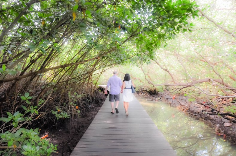 Bali Mangrove